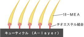 サーベラスグローブースター使用方法