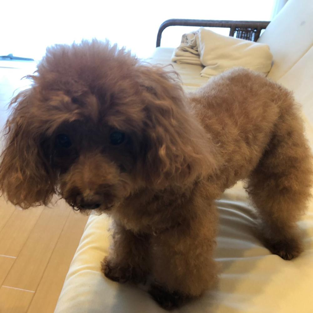 シャンプー 犬 7歳